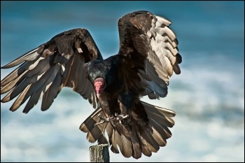 Privatisers are vultures, photo Anita Ritenour (Creative Commons)