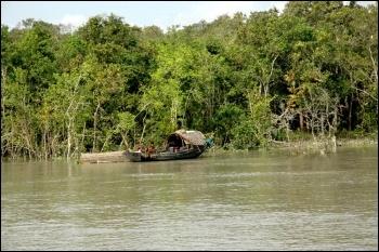 Bangladesh's threatened Sundarbans forest, photo Wikimedia Commons (Creative Commons)