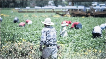 Migrant workers are often forced into low-paid, insecure manual work, like fruit picking, photo by Alex Proimos (Creative Commons)