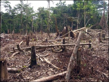 Bolsonaro's Amazon deforestation policies would hasten climate change, photo by Matt Zimmerman/CC