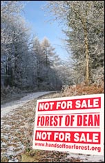 Not for Sale - Forest of Dean, photo www.handsoffourforests.org