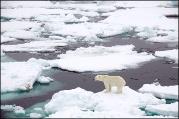 Polar bear on sea ice, photo NASA