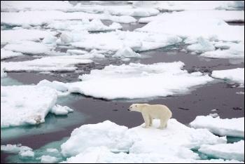 Polar bear on sea ice, photo by NASA